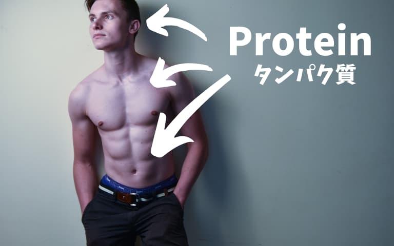 タンパク質は体に超重要
