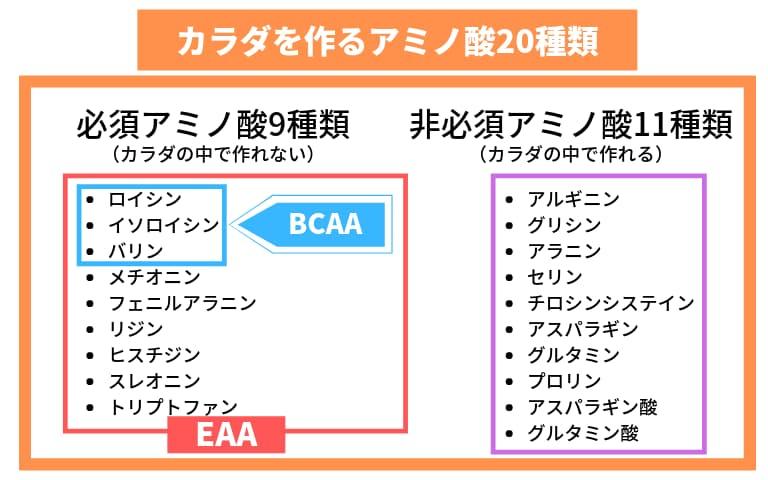 BCAAとEAAまとめ図